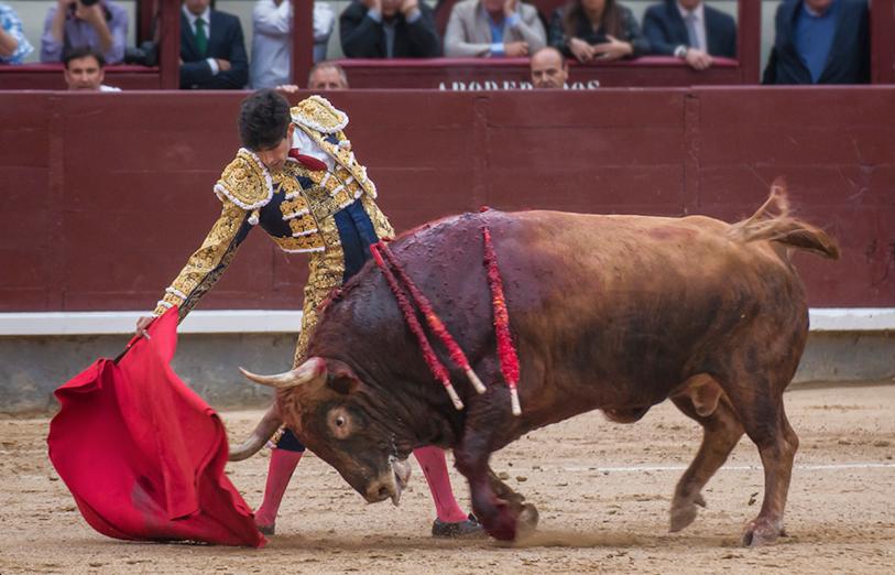 En Madrid demostró su consabida actitud de exposición y agallas con animales de aviesas intenciones / Foto: Ana Escribano